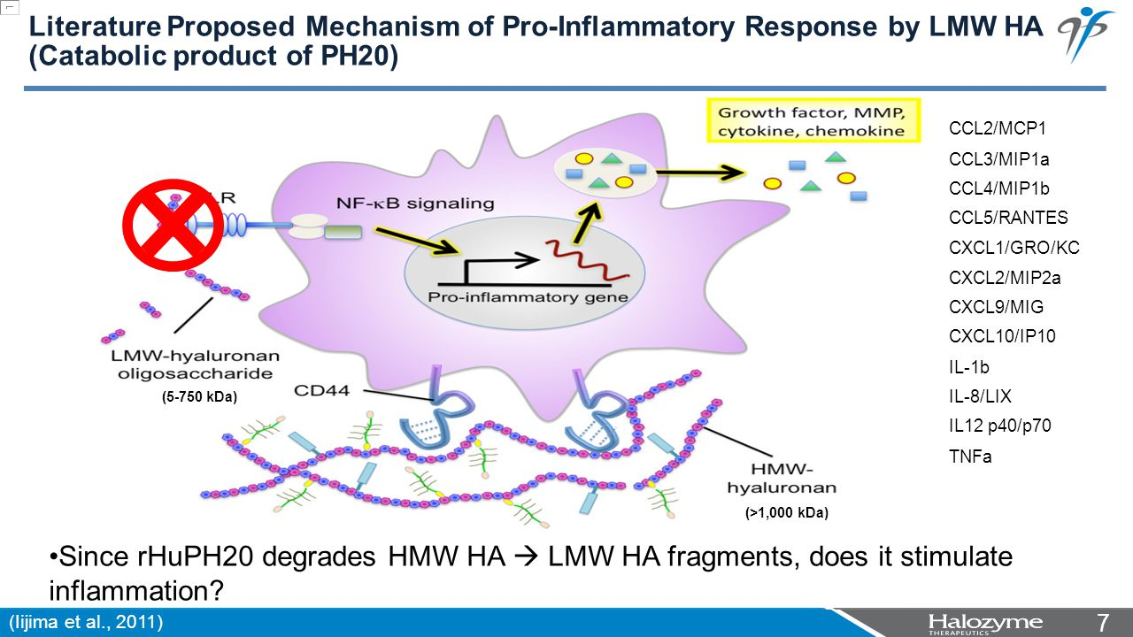 77 Literature Proposed Mechanism of Pro-Inflammatory Response by LMW HA (Catabolic product of PH20) (Iijima et al., 2011) (5-750 kDa) (>1,000 kDa) Since rHuPH20 degrades HMW HA  LMW HA fragments, does it stimulate inflammation.