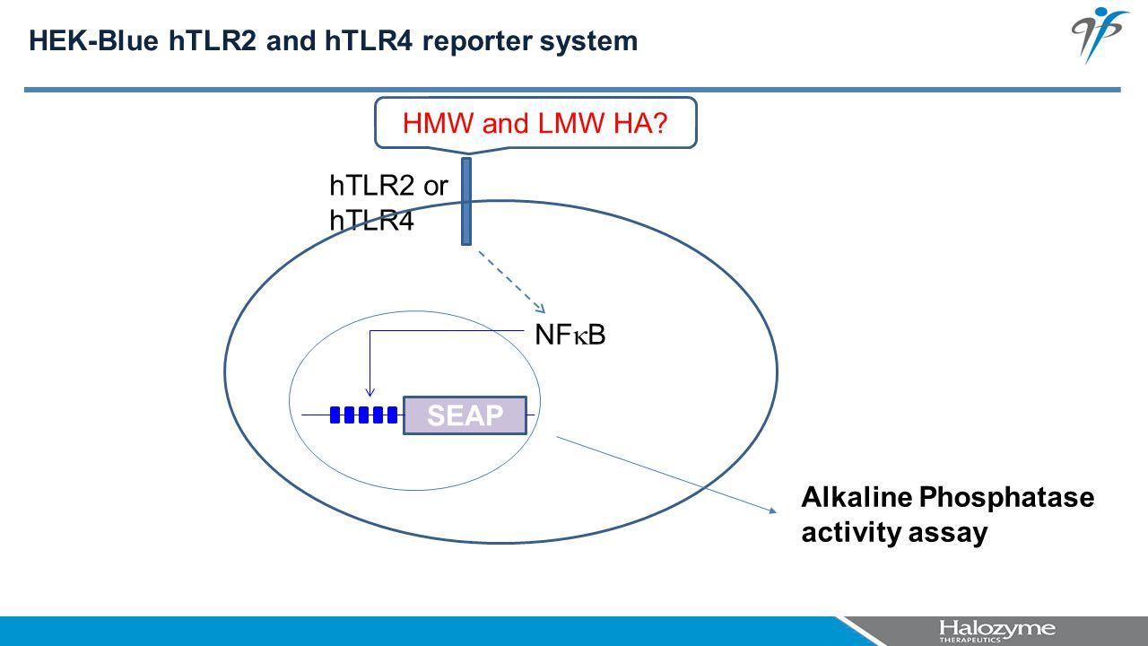 hTLR2 or hTLR4 SEAP NF  B HMW and LMW HA? Alkaline Phosphatase activity assay HEK-Blue hTLR2 and hTLR4 reporter system