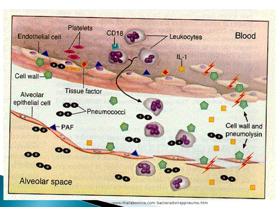 http://www.thailabonline.com/bacteria6streppneumo.htm