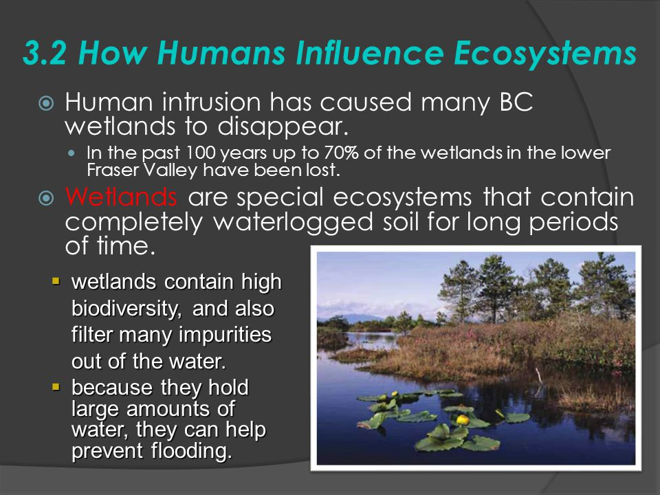 3.2 How Humans Influence Ecosystems  Human intrusion has caused many BC wetlands to disappear. In the past 100 years up to 70% of the wetlands in the