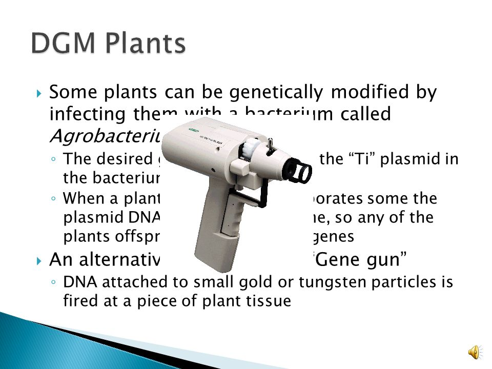  The insertion of foreign genes into organisms  Bacteria: ◦ Plasmids are used as a vector to transfer foreign genes ◦ A restriction enzyme is used to excise a specific gene which will anneal to a plasmid cut with the same enzyme ◦ Bacteriophages are also commonly used to transfer DNA