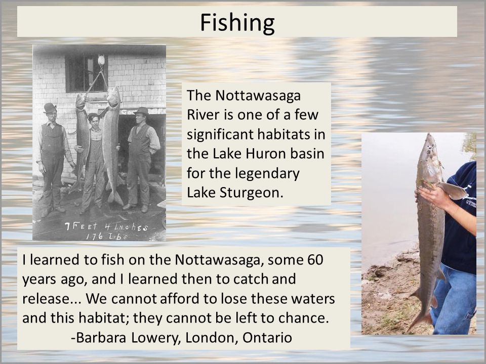 Fishing I learned to fish on the Nottawasaga, some 60 years ago, and I learned then to catch and release...