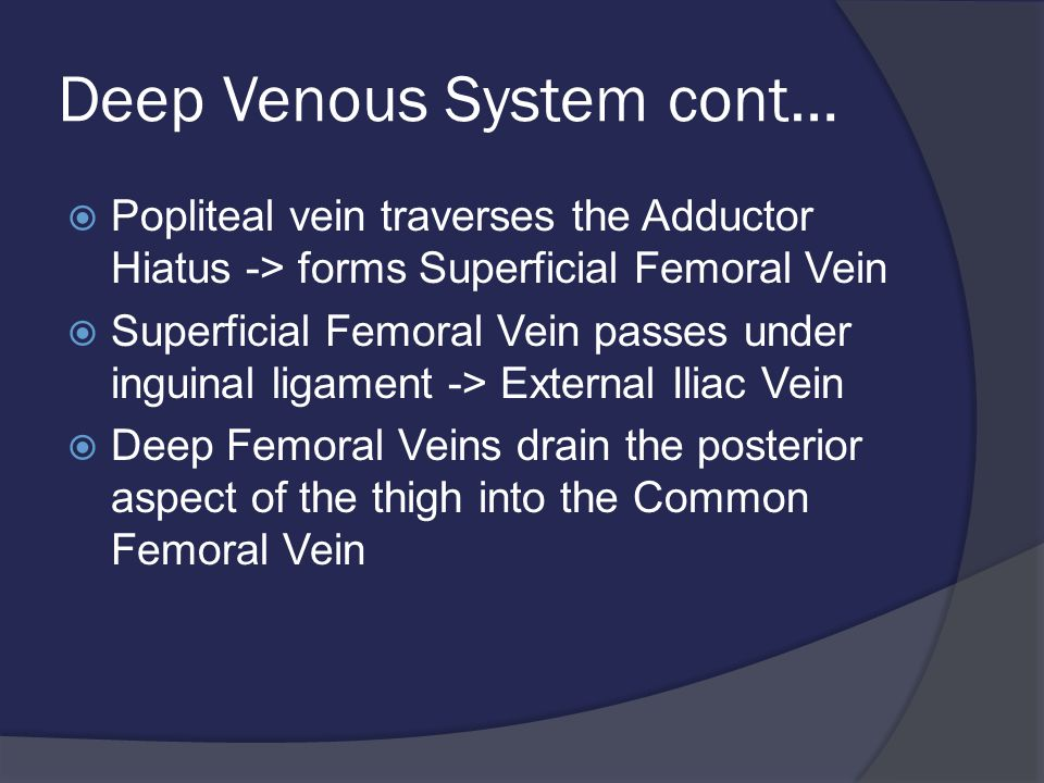 Deep Venous System cont…  Popliteal vein traverses the Adductor Hiatus -> forms Superficial Femoral Vein  Superficial Femoral Vein passes under inguinal ligament -> External Iliac Vein  Deep Femoral Veins drain the posterior aspect of the thigh into the Common Femoral Vein