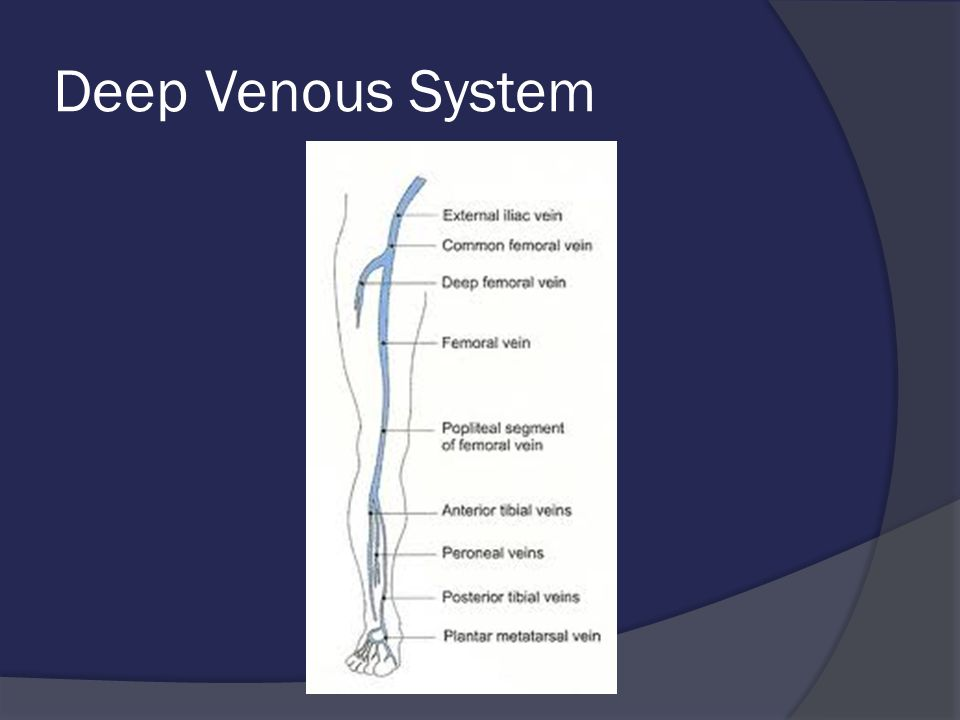 Deep Venous System