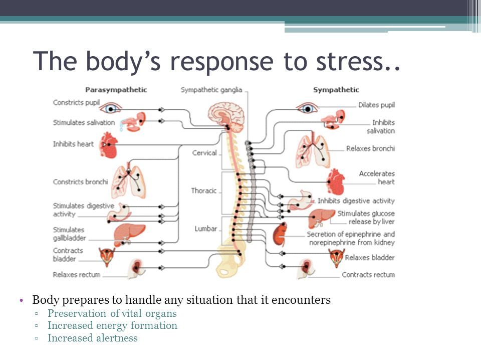 The body's response to stress..