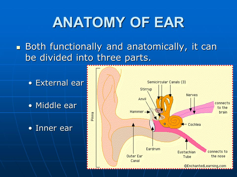 ANATOMY OF EAR Both functionally and anatomically, it can be divided into three parts. Both functionally and anatomically, it can be divided into thre