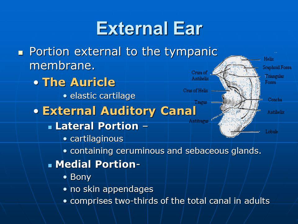 External Ear Portion external to the tympanic membrane. Portion external to the tympanic membrane. The AuricleThe Auricle elastic cartilageelastic car