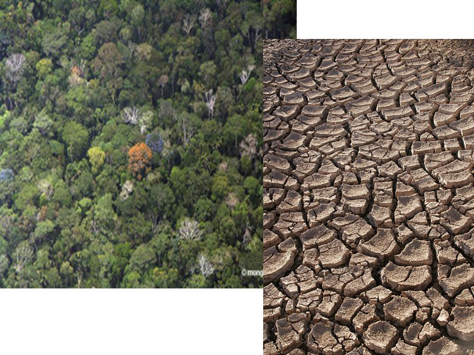 Consequences of Deforestation  Desertification  Soil erosion  Silting of lakes and rivers  Floods  Climate change (local and global)  Drought