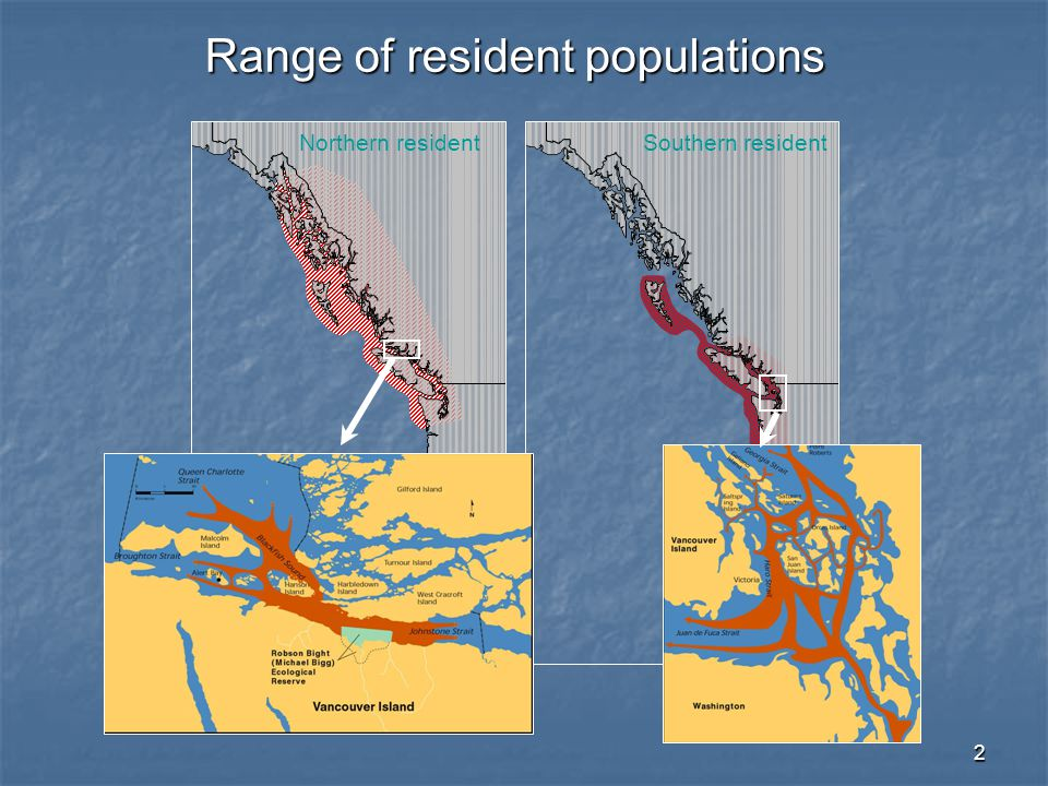 3 British Columbia Washington 50°N 55°N 130°W N Kilometres 0100 200 SE Alaska Chinook Chum Coho Pink Key n = 36 n = 74 n = 58 n = 429 n = 45 n = 164 Frequency distribution of salmonid species consumed by resident killer whale in different coastal regions (n = 806 kills).