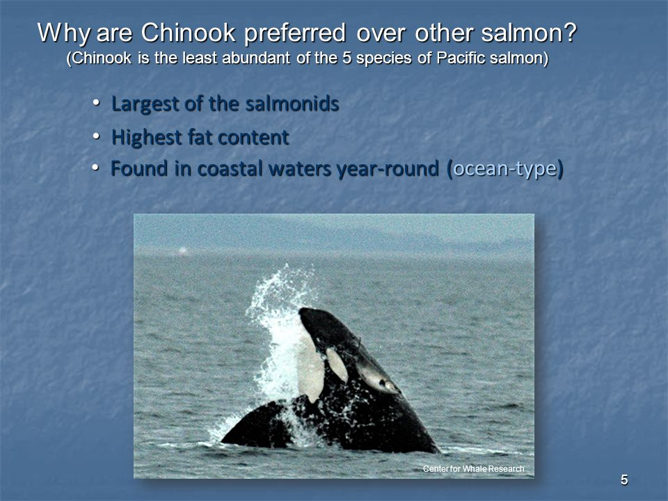6 Chinook GSI for SRKW Hanson et al. (2010)