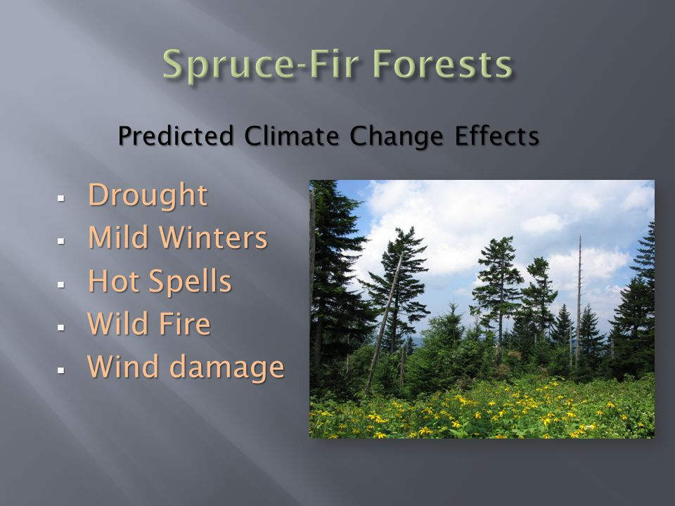  Drought  Mild Winters  Hot Spells  Wild Fire  Wind damage Predicted Climate Change Effects