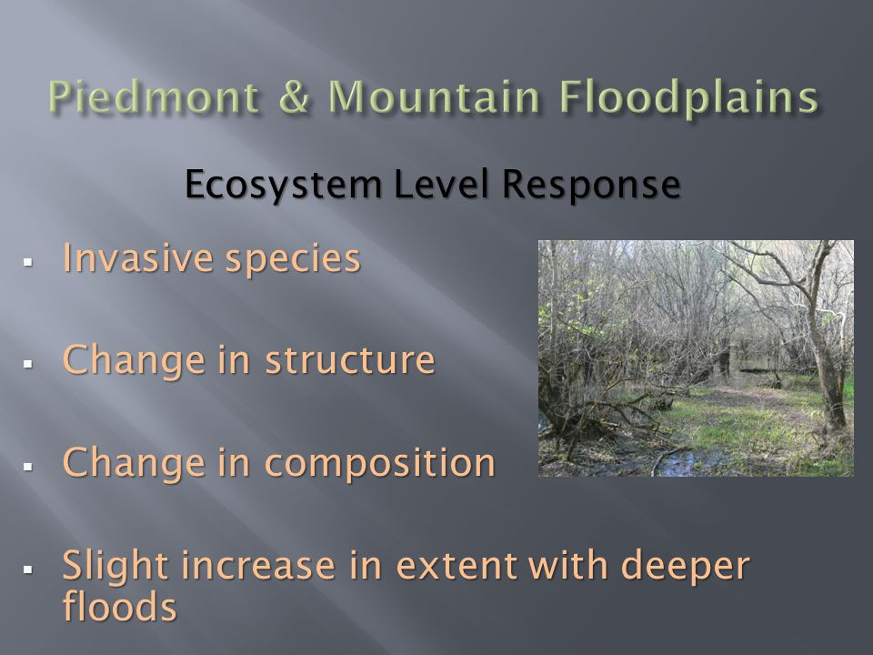 Ecosystem Level Response  Invasive species  Change in structure  Change in composition  Slight increase in extent with deeper floods