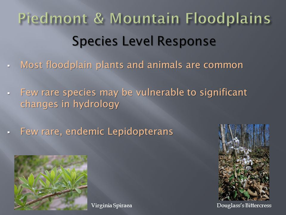 Species Level Response  Most floodplain plants and animals are common  Few rare species may be vulnerable to significant changes in hydrology  Few