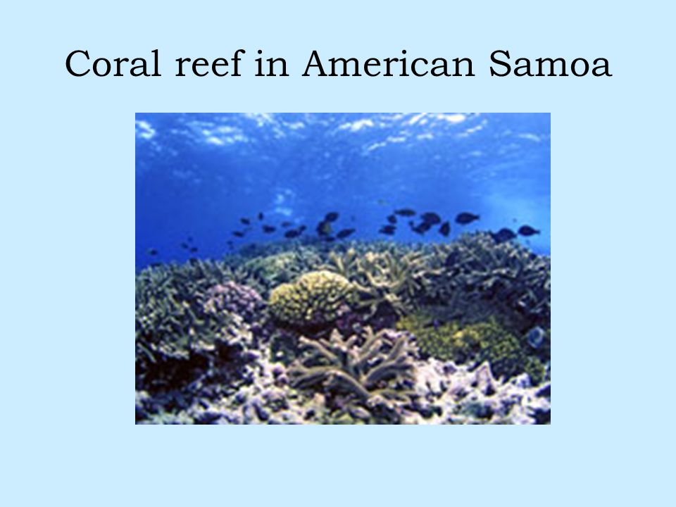 Coral reef in American Samoa