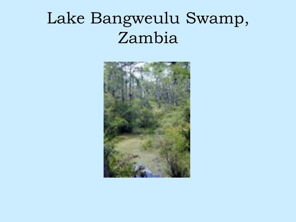 Lake Bangweulu Swamp, Zambia
