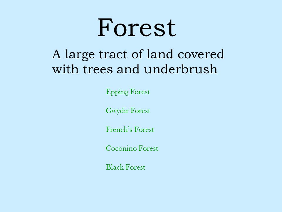Forest A large tract of land covered with trees and underbrush Epping Forest Gwydir Forest French's Forest Coconino Forest Black Forest