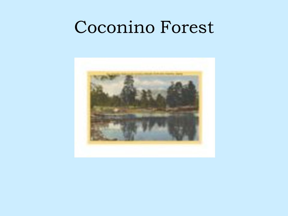 Coconino Forest
