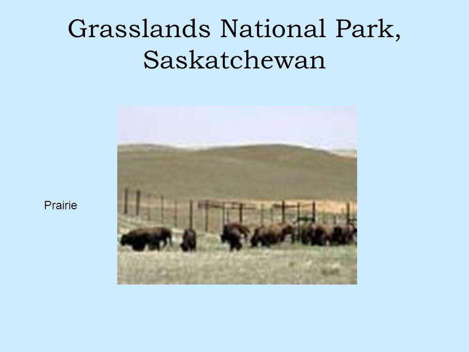 Grasslands National Park, Saskatchewan Prairie