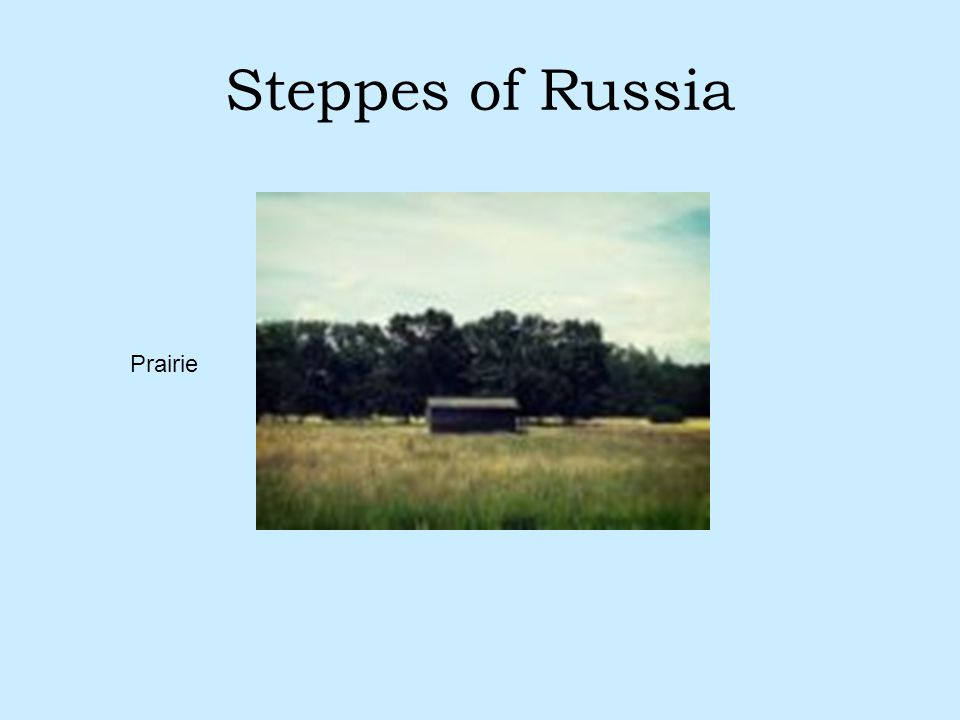 Steppes of Russia Prairie