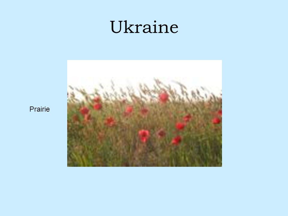 Ukraine Prairie