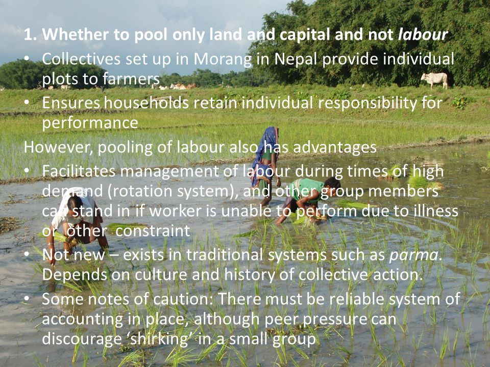 1. Whether to pool only land and capital and not labour Collectives set up in Morang in Nepal provide individual plots to farmers Ensures households r