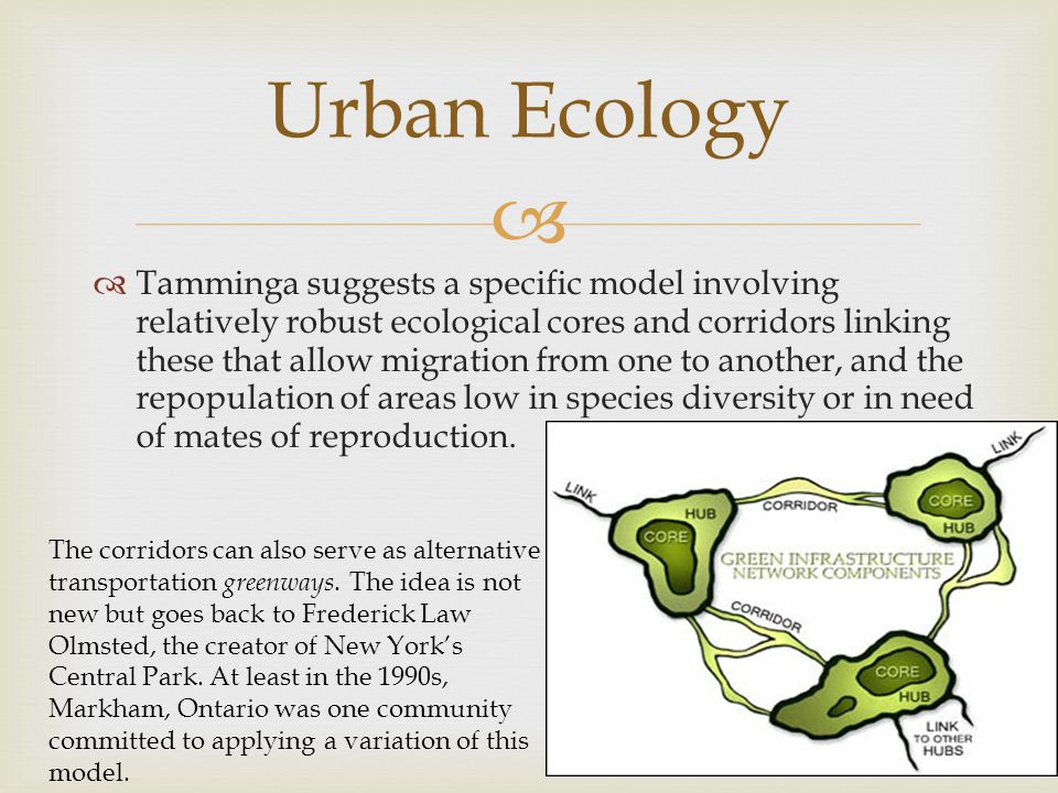   Tamminga suggests a specific model involving relatively robust ecological cores and corridors linking these that allow migration from one to anoth