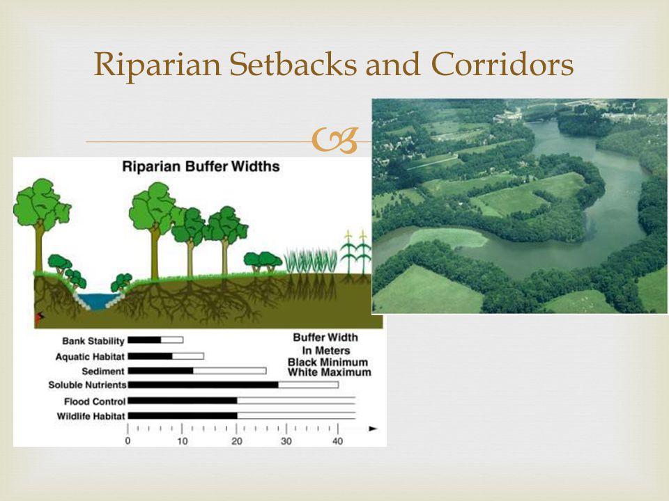  Riparian Setbacks and Corridors
