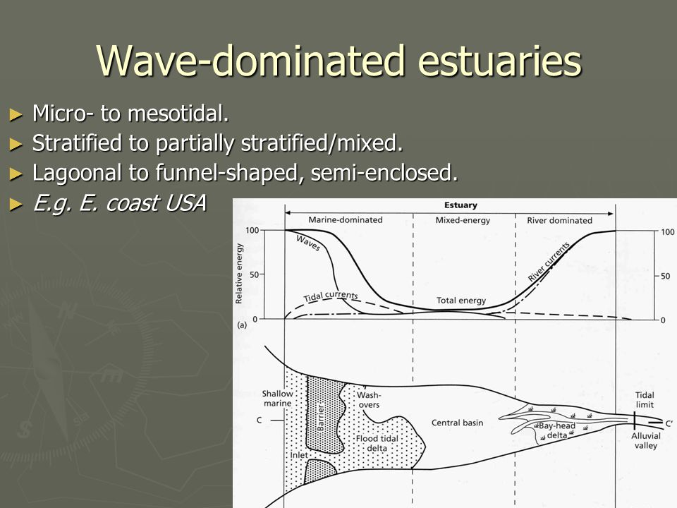 Wave-dominated estuaries ► Micro- to mesotidal. ► Stratified to partially stratified/mixed.