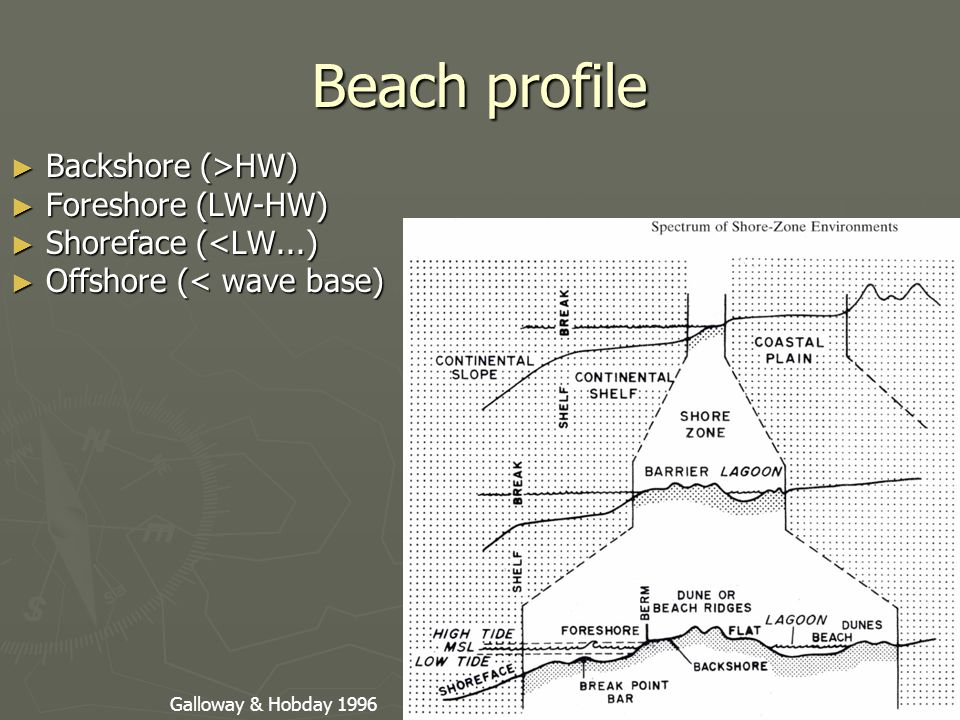 Beach profile ► Backshore (>HW) ► Foreshore (LW-HW) ► Shoreface (<LW...) ► Offshore (< wave base) Galloway & Hobday 1996