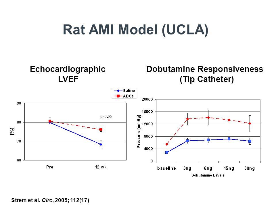 Rat AMI Model (UCLA) Echocardiographic Dobutamine Responsiveness LVEF (Tip Catheter) Strem et al.