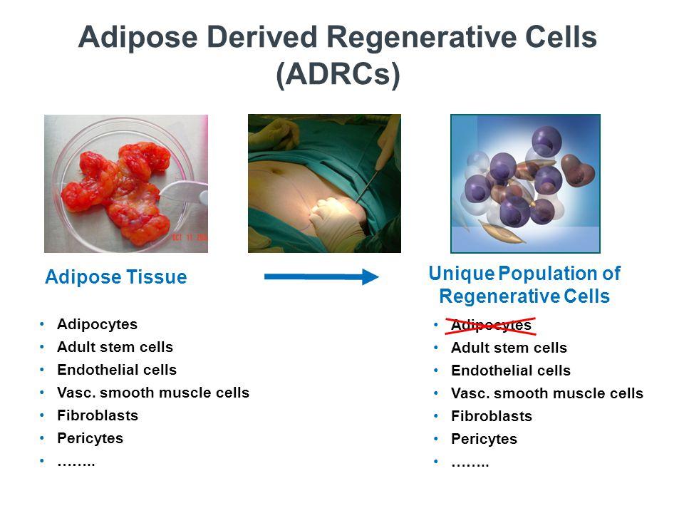 Adipocytes Adult stem cells Endothelial cells Vasc.