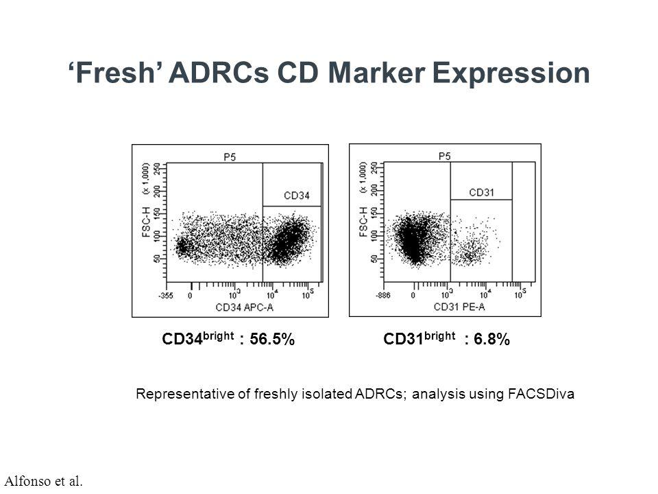 Wall thickness infarcted myocardium / wall thickness healthy myocardium ns p < 0,02 Tulane University Control ADC BMC Porcine AMI Model – Cultured ADSCs LV Wallthickness