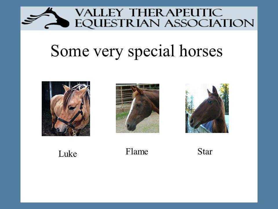 Some very special horses Luke FlameStar