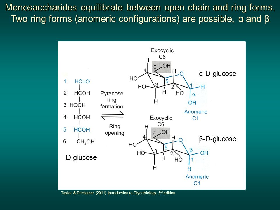 Monosaccharides equilibrate between open chain and ring forms.