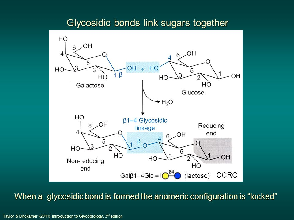 When a glycosidic bond is formed the anomeric configuration is locked Glycosidic bonds link sugars together Taylor & Drickamer (2011) Introduction to Glycobiology, 3 rd edition (lactose) CCRC