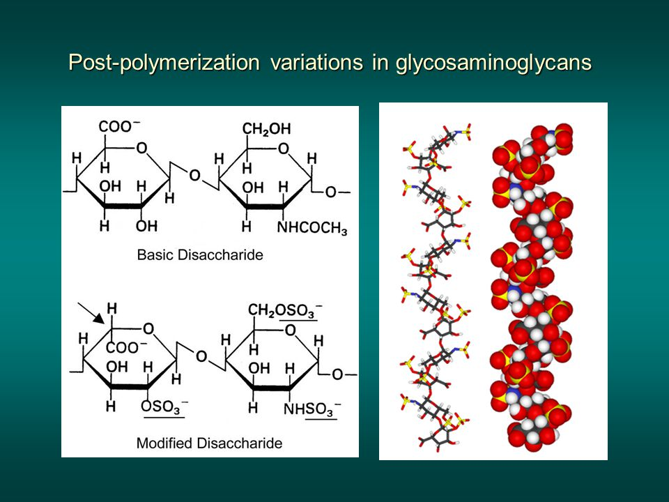 Post-polymerization variations in glycosaminoglycans