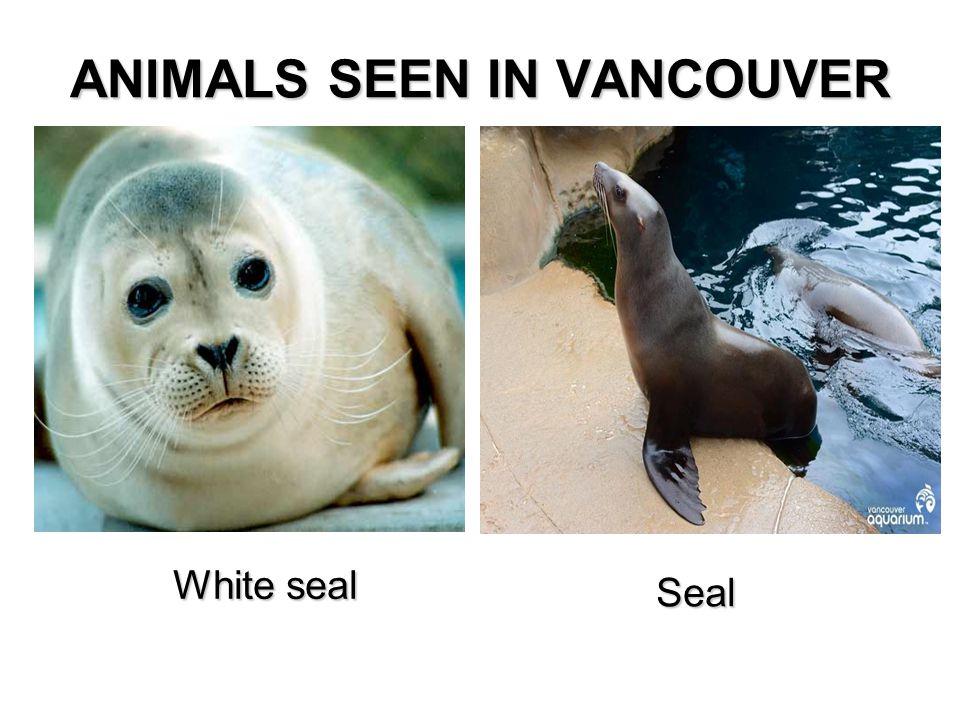 White seal Seal Seal