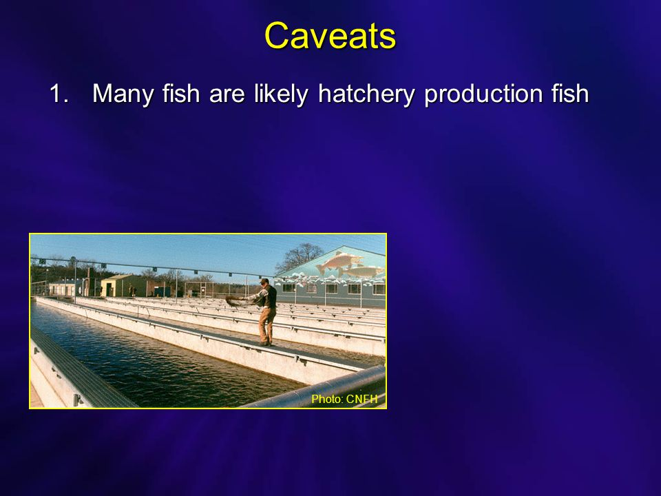 Caveats 1.Many fish are likely hatchery production fish Photo: CNFH