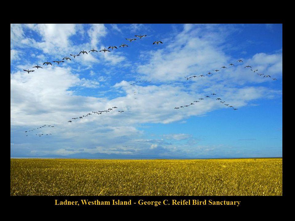 Westham Island