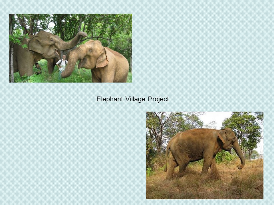 Elephant Village Project