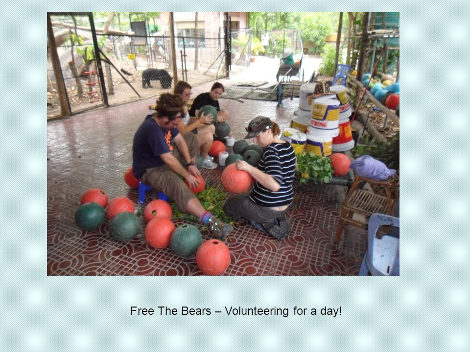 Free The Bears – Volunteering for a day!