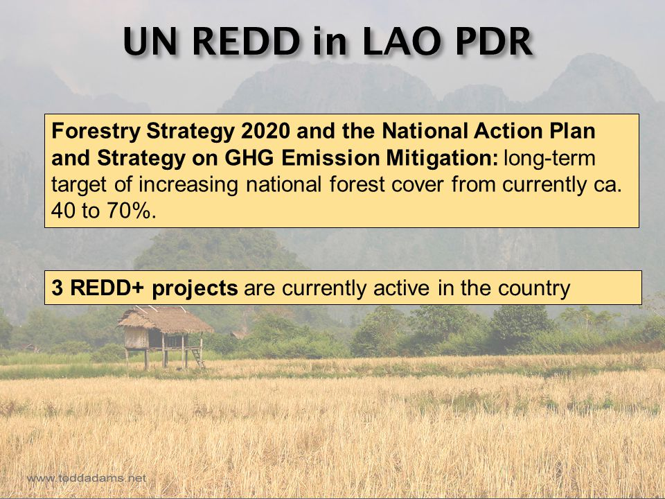 UN REDD in LAO PDR Forestry Strategy 2020 and the National Action Plan and Strategy on GHG Emission Mitigation: long-term target of increasing national forest cover from currently ca.