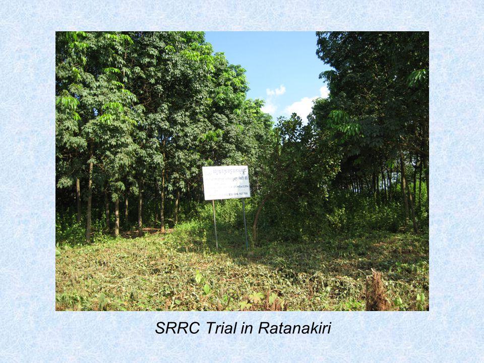 SRRC Trial in Ratanakiri