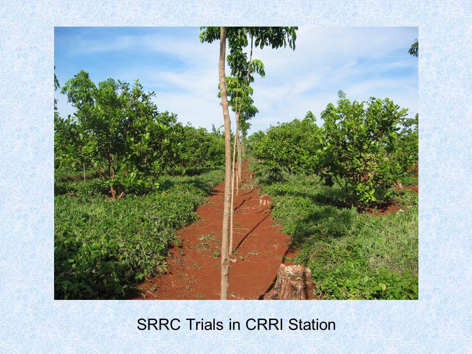 SRRC Trials in CRRI Station