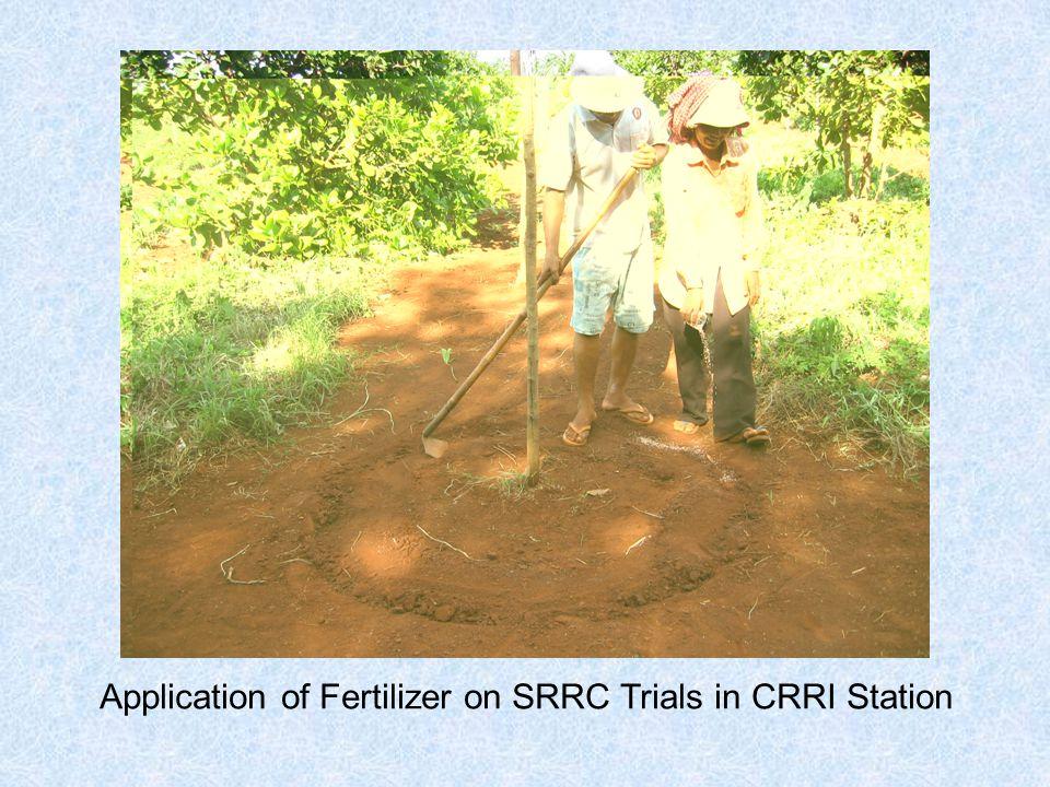 Application of Fertilizer on SRRC Trials in CRRI Station