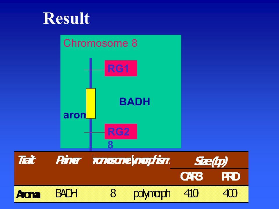 Result Chromosome 8 BADH aroma RG1 RG2 8