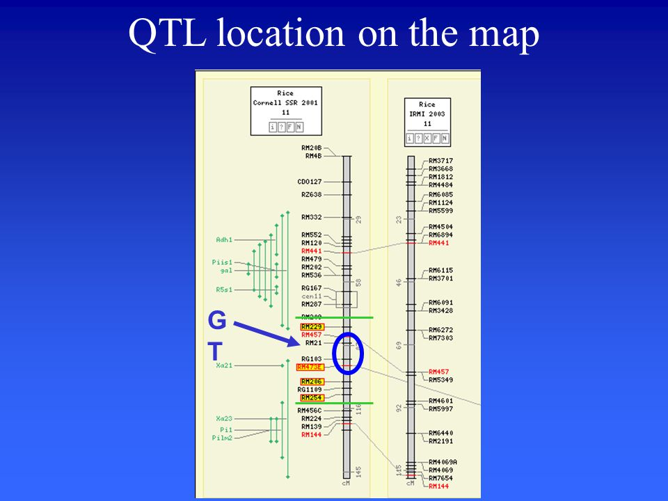 QTL location on the map GTGT