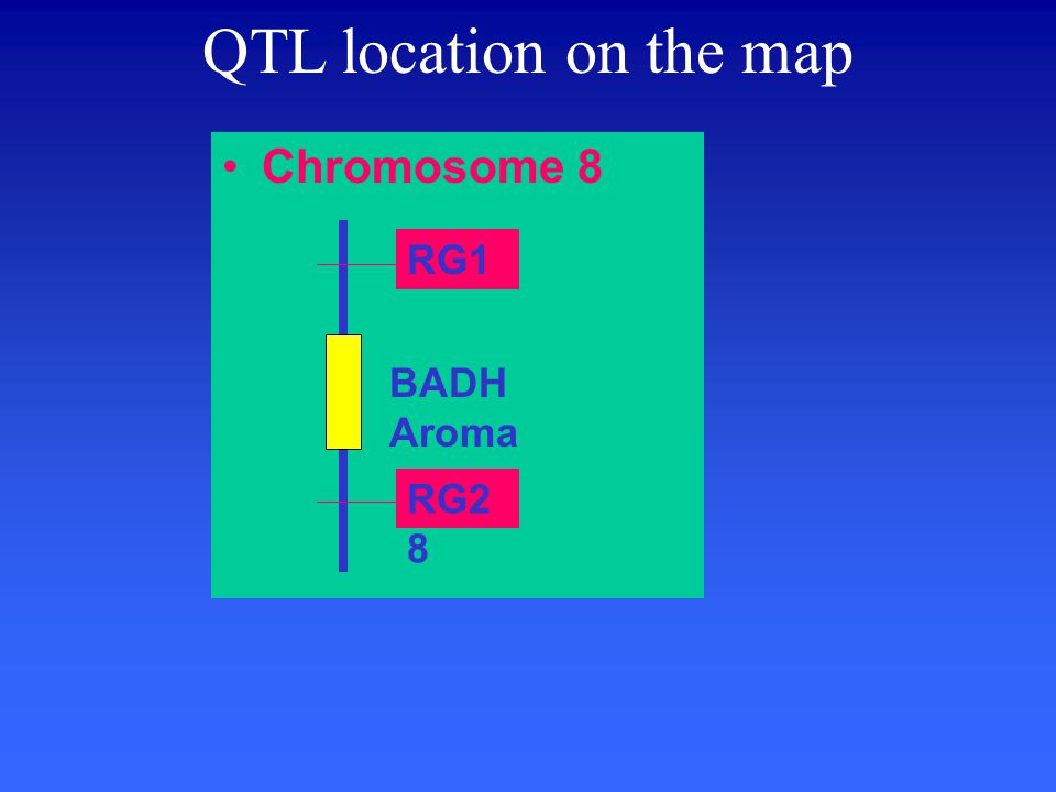Chromosome 8 QTL location on the map RG1 RG2 8 BADH Aroma