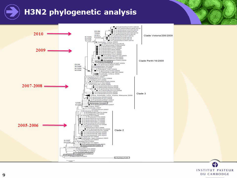 9 H3N2 phylogenetic analysis 2010 2009 2007-2008 2005-2006