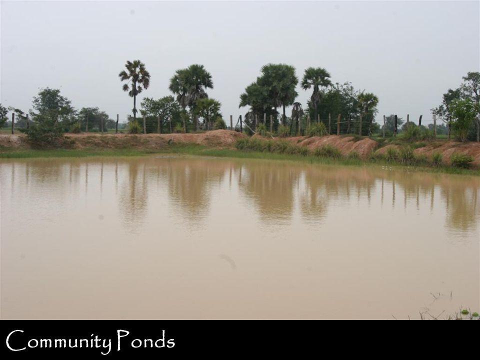 Community Ponds